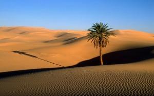 bg-dunes2