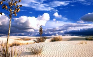 desert_yuccas
